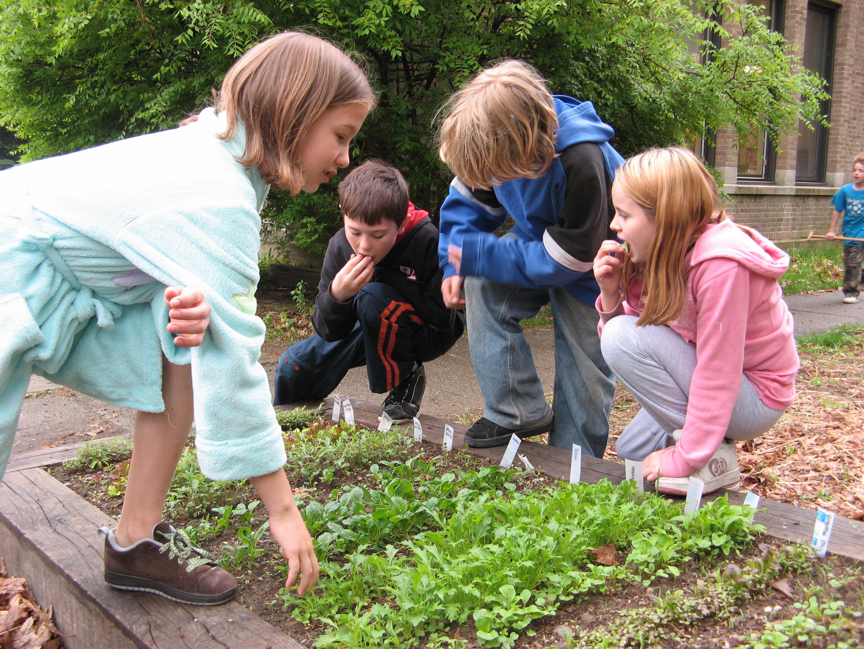 School Community Gardens Windham County Farm To School